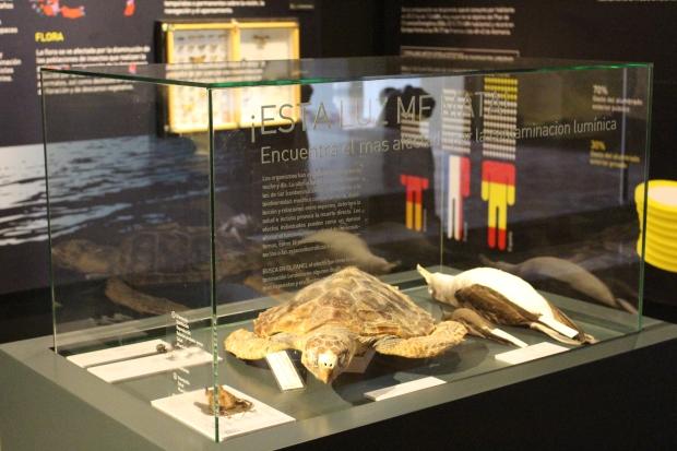 La sobreiluminación afecta a animales como las tortugas o las aves.
