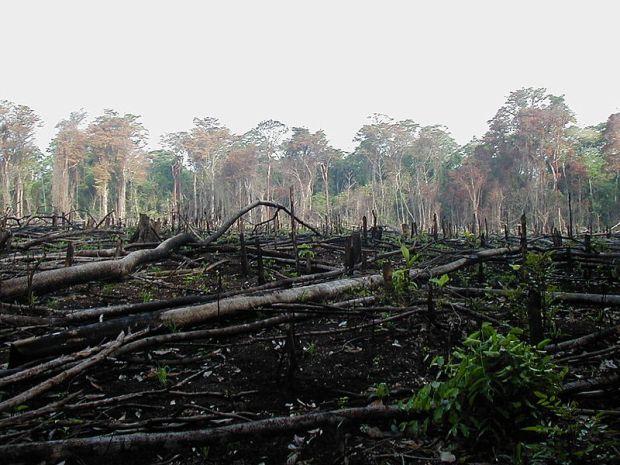 Selva quemada para la agricultura en el sur de México.