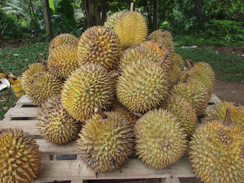 El durián es considerada como el rey de las frutas, pero también como la fruta más apestosa del mundo.