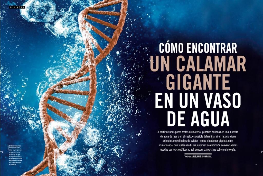Cómo encontrar un calamar gigante en un vaso de agua. Artículo de Ángel Luis León Panal en la revista Muy Interesante.