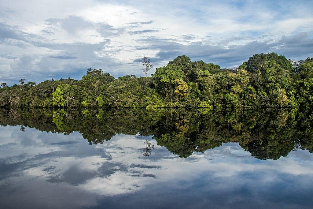 Parque nacional del Jaú (Brasil)